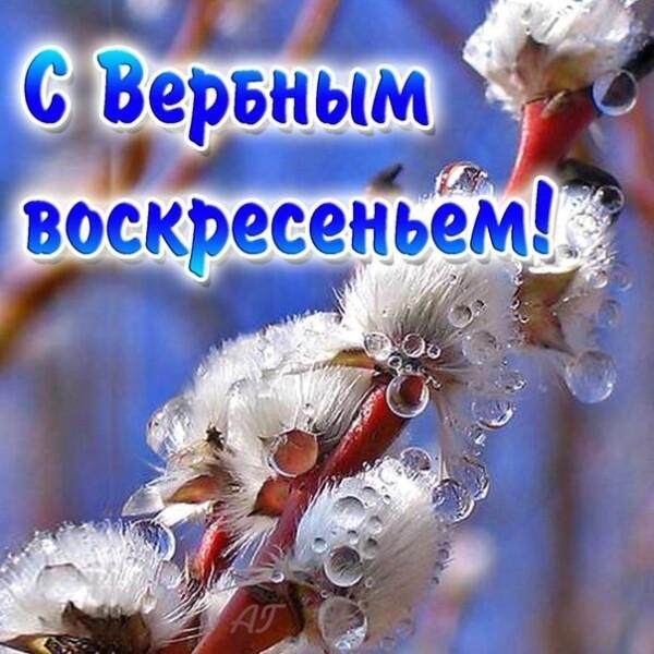 5rv_iV7sPtU